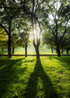 Backlight sunset shot of trees and grass at park landscape