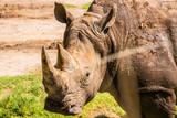 Rhino - 176795033