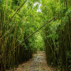 Bamboo Forest, Pipiwai Trail, Hana, Maui, Hawaii