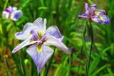 晴天の公園と花の風景7 - 176804009