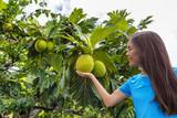 French Polynesia travel tourist girl with breadfruit - 176816039