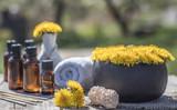 Dandelion spa oil with fresh dandelion flowers on wooden table