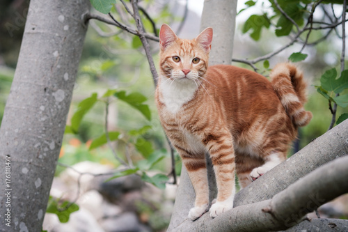 Cute ginger kitten perched in a tree Poster