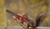 squirrel holding a saw in hands - 176823630
