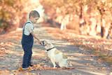 kleiner Junge füttert seinen Hund im Park - 176825482