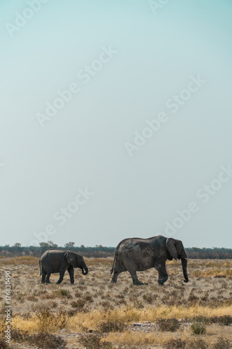 Mother Elephant with Child Roaming a Field in Namibia Poster