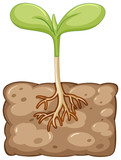 Plant growing from underground - 176835833