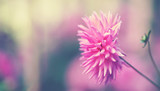 Herbstblumen im Park - 176836679