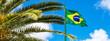 Quadro Folhas de palmeira e bandeira do Brasil.