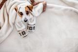 Dog at home - 176844464