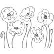 vector contour illustration of poppy flower set