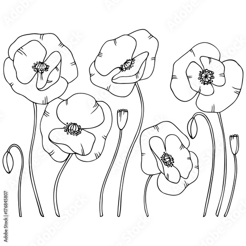 vector contour illustration of poppy flower set