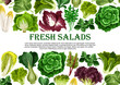 Salad leaf, vegetable greens banner border design