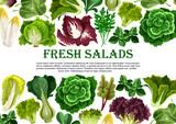 Salad leaf, vegetable greens banner border design - 176849003