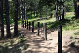 Obstacles for crossing and training in the forest - 176850031