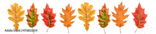 panorama jesienne liście dębu