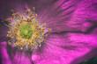 Fiore macro