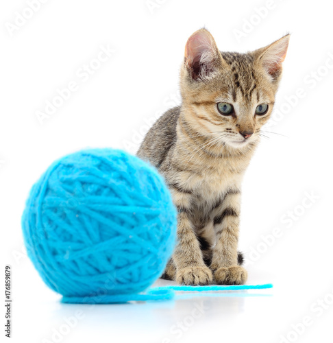 Cat with ball of yarn Poster