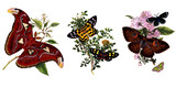 Illustration of butterflies and plants. - 176861892