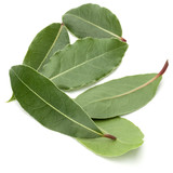 Aromatic bay leaves - 176862263