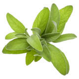 Sage herb leaves  bouquet isolated on white background cutout. - 176862412