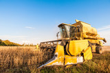 Harvesting of soybean field with combine harvester. - 176862897