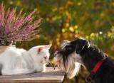 Dog smelling little white cat - 176865841