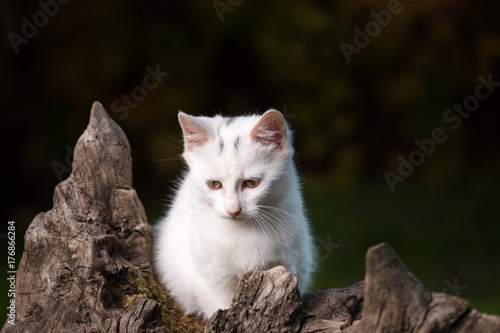 Small white cat on stump