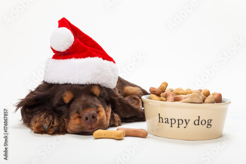 Poster Cute Spaniel Puppy Dog in Santa Hat Sleeping by Bowl of Biscuits