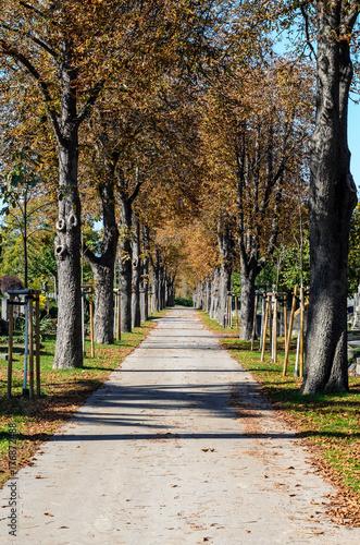 Alley at cemetery Vienna, Austria Poster