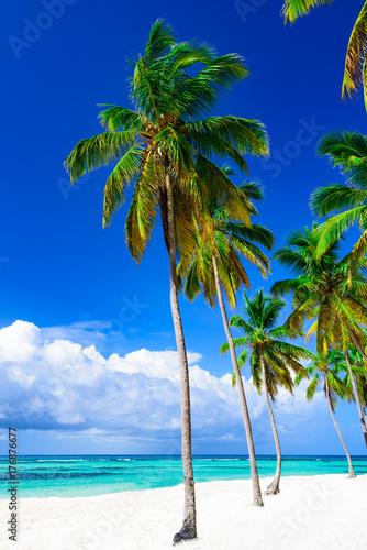 Papiers peints Bleu fonce paradise tropical beach palm the Caribbean Sea