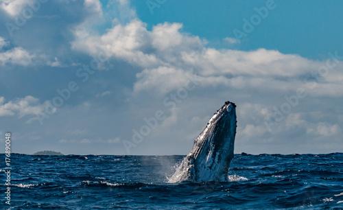 wieloryb-w-blekitnym-polinezyjskim-morzu
