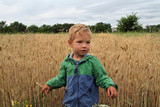 A boy with ruminant wheat hair strokes his hands with ears of wheat ears of golden color. A small boy future agronomist stands on the field with a ripe grain culture. - 176917254