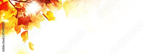 Leinwandbild Motiv Goldener Herbst auf weissem Hintergrund