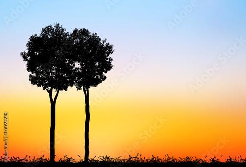 Papiers peints Melon silhouette tree on blurry sunset