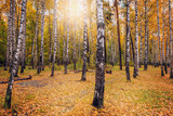 View of the autumn forest. - 176922649