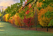 Row of Trees in Peak Fall Colors