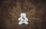 Two white plush toy teddy bear on the autumn grass. Top view.  - 176929461