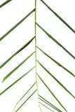 Palm leaves - 176943488