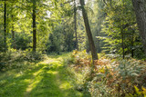 idyllic forest scenery - 176944290