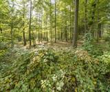 idyllic forest scenery
