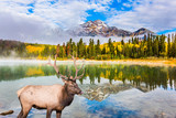 Noble deer grazing by Pyramid lake - 176948013