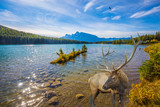 The noble deer graze at the lake - 176949861