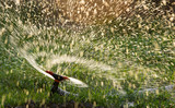 Splashing water from a hose on the lawn - 176950061