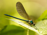 dragonfly in the park in nature - 176950845