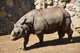Rhino - 176956083