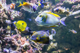 Colorful underwater world with corals and tropical fishes - 176957063