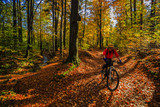 Cycling, mountain bikeing woman on cycle trail in autumn forest. Mountain biking in autumn landscape forest. Woman cycling MTB flow uphill trail. - 176961210