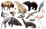 set of north american animals isolated - 176973843