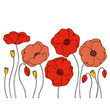 color vector simple  illustration of decorative poppy flower